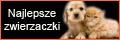 zwierzaczki.najlepsze.net